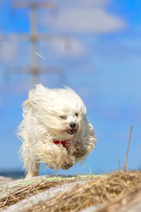 action dogの素材 [FYI00872325]