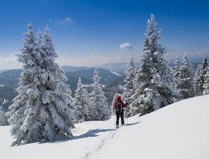 snowshoe tourの写真素材 [FYI00872436]