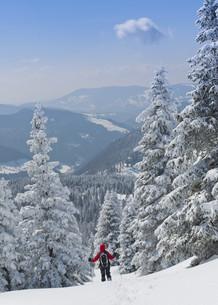 snowshoe tourの写真素材 [FYI00872455]