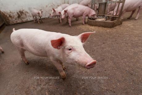 useful_animalsの写真素材 [FYI00872480]