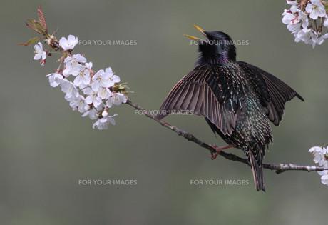 birdsの素材 [FYI00872743]