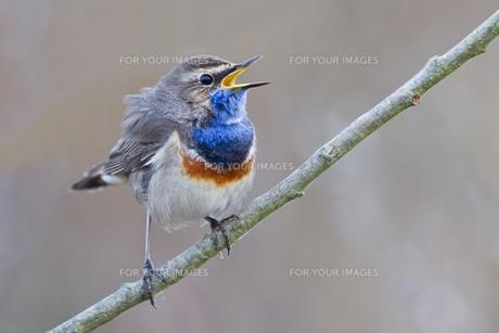birdsの写真素材 [FYI00872760]