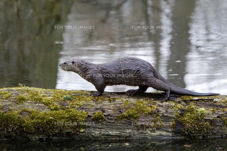 mammalの写真素材 [FYI00872818]