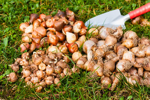 bulbs in the gardenの素材 [FYI00873033]