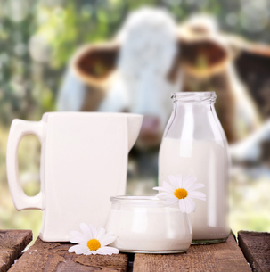 milk with cows in the backgroundの写真素材 [FYI00873153]