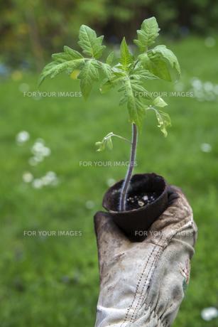 plants_flowersの素材 [FYI00873264]