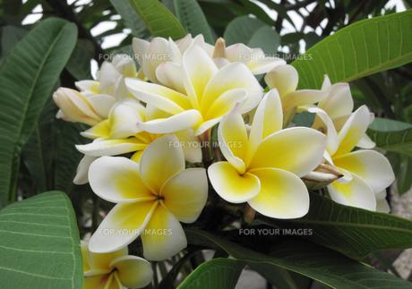 plants_flowersの素材 [FYI00873442]
