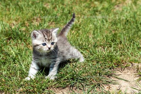 young catの写真素材 [FYI00873863]