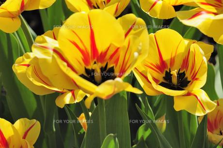 plants_flowersの写真素材 [FYI00873937]