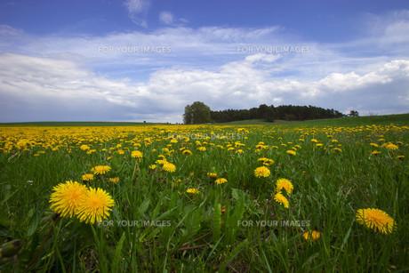 spring meadowの素材 [FYI00874025]