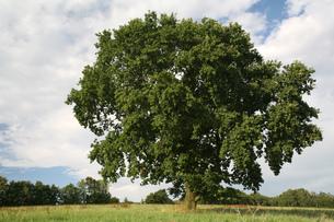 treeの写真素材 [FYI00874294]