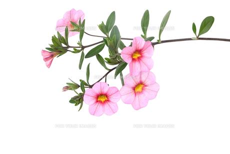 plants_flowersの素材 [FYI00874411]