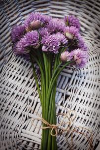 plants_flowersの写真素材 [FYI00874567]
