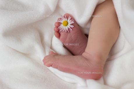 baby_pregnancyの写真素材 [FYI00875072]
