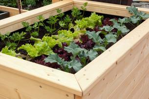 vegetable gardenの写真素材 [FYI00875495]