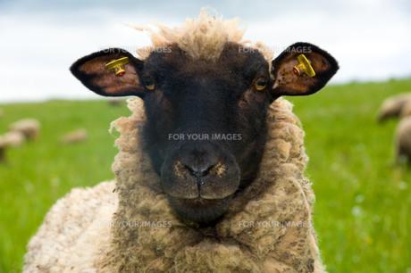 useful_animalsの写真素材 [FYI00875586]