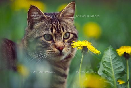 home_animalsの写真素材 [FYI00875876]
