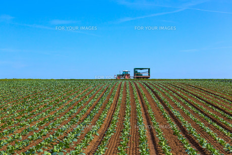 agricultureの写真素材 [FYI00876027]