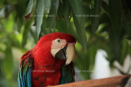 birdsの写真素材 [FYI00876031]
