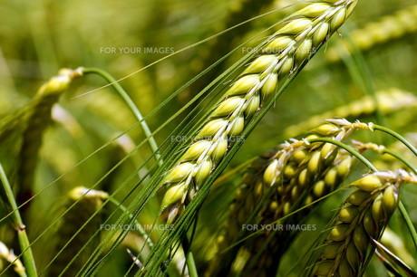 grass_fieldsの素材 [FYI00876066]