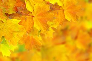 leafの写真素材 [FYI00876088]