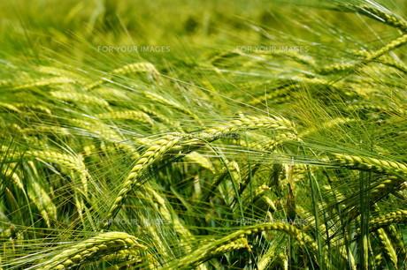 grass_fieldsの素材 [FYI00876359]