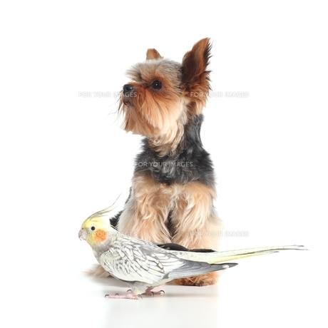 home_animalsの写真素材 [FYI00876380]