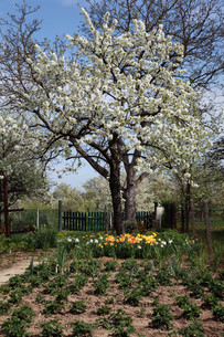 garden with trees,flowers,fruits and plantsの写真素材 [FYI00876609]