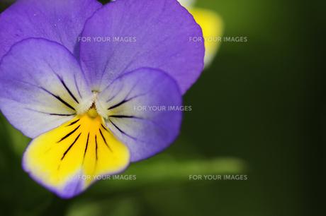 plants_flowersの写真素材 [FYI00876884]