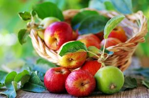 fruits_vegetablesの写真素材 [FYI00876931]
