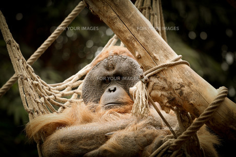 mammalsの写真素材 [FYI00876934]