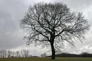treeの写真素材 [FYI00876937]