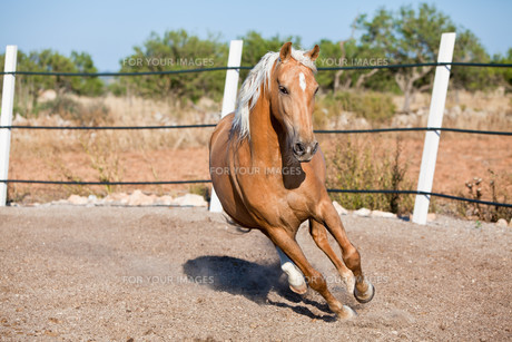 cruzado horse meadow bright outdoor in summer on theの写真素材 [FYI00877070]
