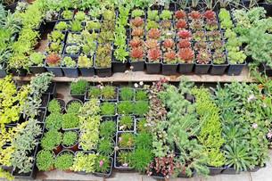 plants_flowersの素材 [FYI00877122]