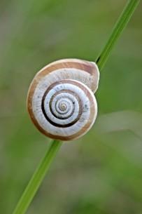 western heath snail on d?rnbergの写真素材 [FYI00877203]