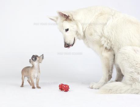 home_animalsの素材 [FYI00877287]
