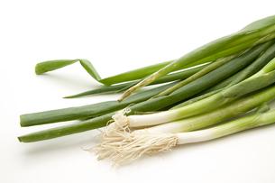fresh green onionsの写真素材 [FYI00877745]