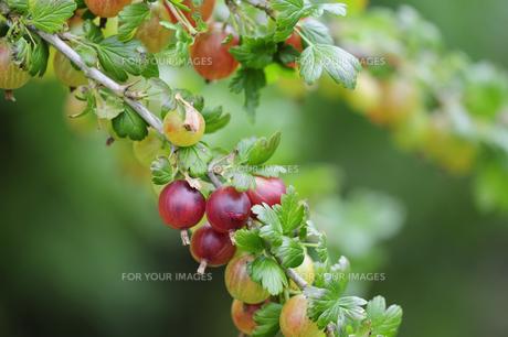 fruits_vegetablesの写真素材 [FYI00877895]