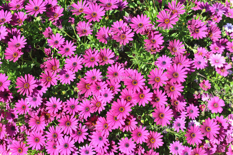plants_flowersの写真素材 [FYI00878799]