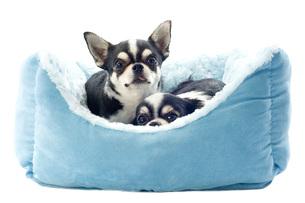dogの写真素材 [FYI00878829]