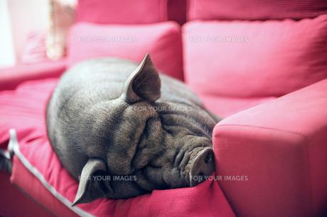 useful_animalsの写真素材 [FYI00878851]