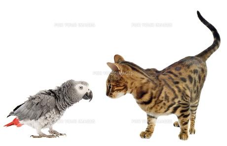 home_animalsの写真素材 [FYI00878854]
