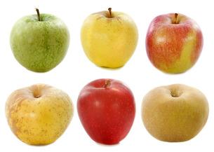 fruits_vegetablesの写真素材 [FYI00878881]