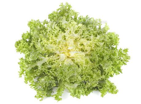 vegetableの写真素材 [FYI00878939]