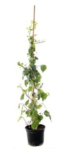 plants_flowersの写真素材 [FYI00878952]