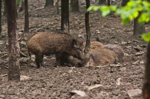 mammalsの写真素材 [FYI00879192]