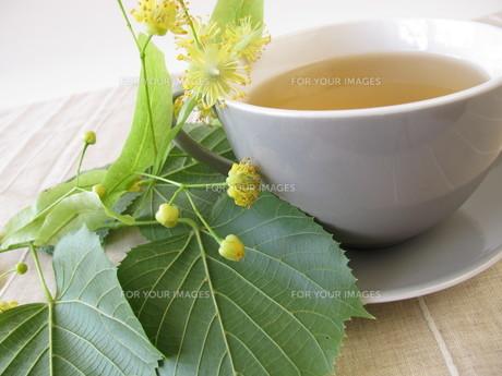 lime blossom teaの素材 [FYI00879207]