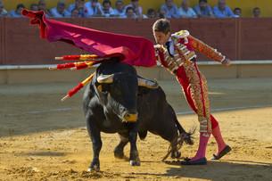bullの写真素材 [FYI00879212]