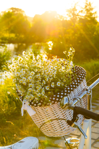 baskets with daisies at sunsetの写真素材 [FYI00879248]