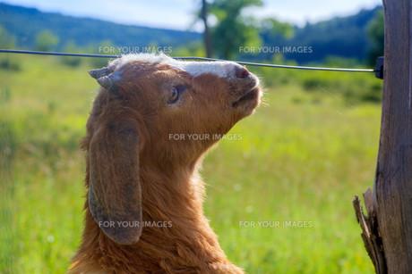 useful_animalsの写真素材 [FYI00879312]